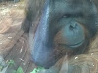 Colchester Zoo (6)
